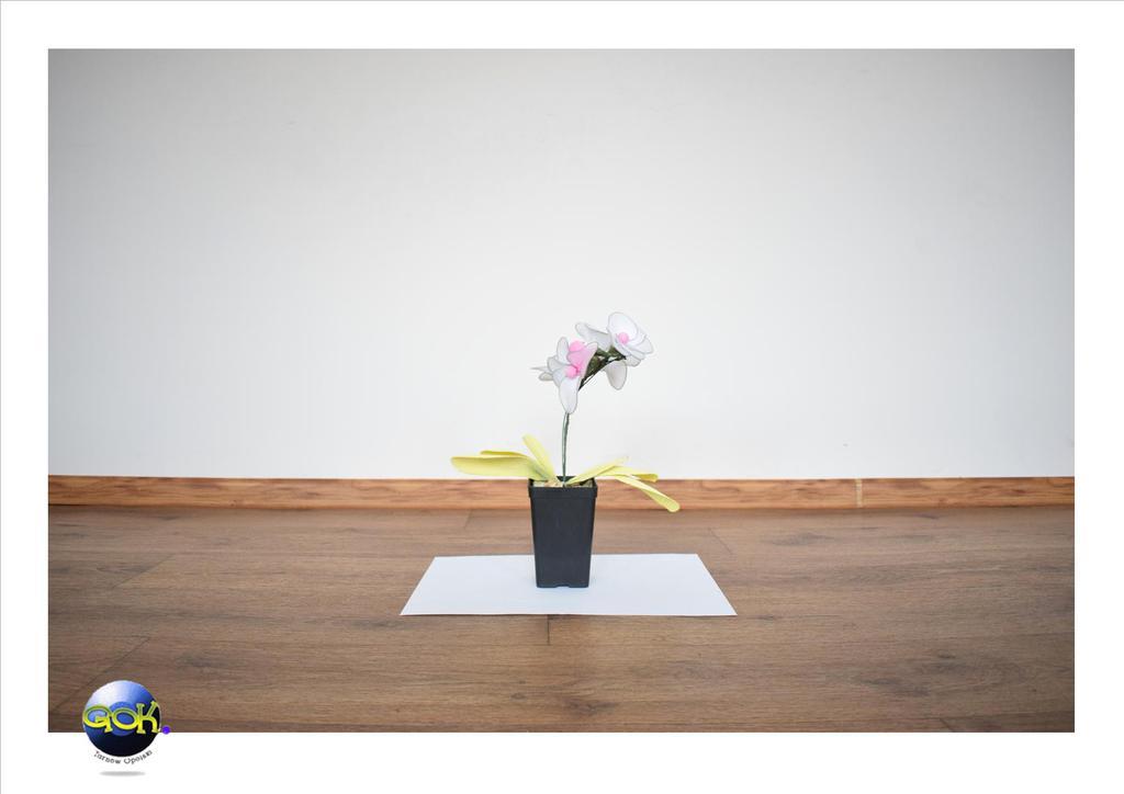 4 kwiatek.jpeg