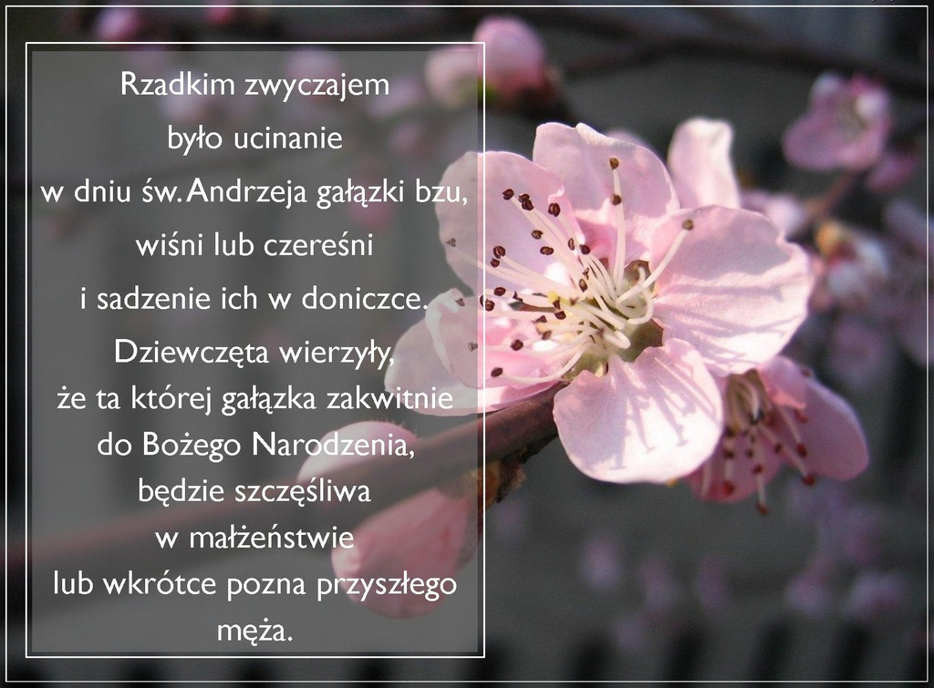 1-Andrzejki 3.jpeg